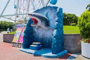サメのフォトスポット
