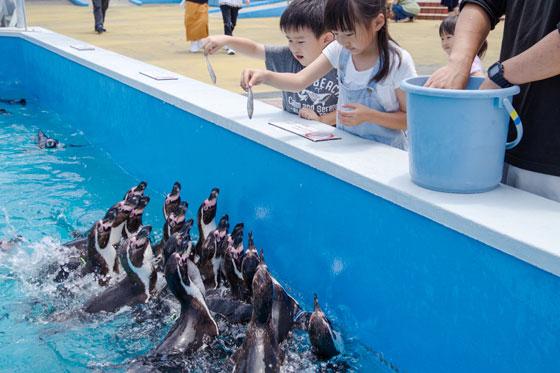 ペンギンに餌やりをする子どもたちの写真