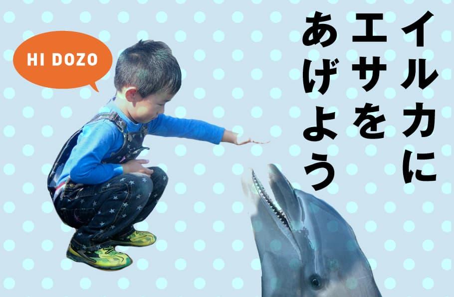 イルカにエサをあげよう